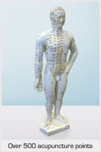 Acupuncture model with over 500 acupuncture points